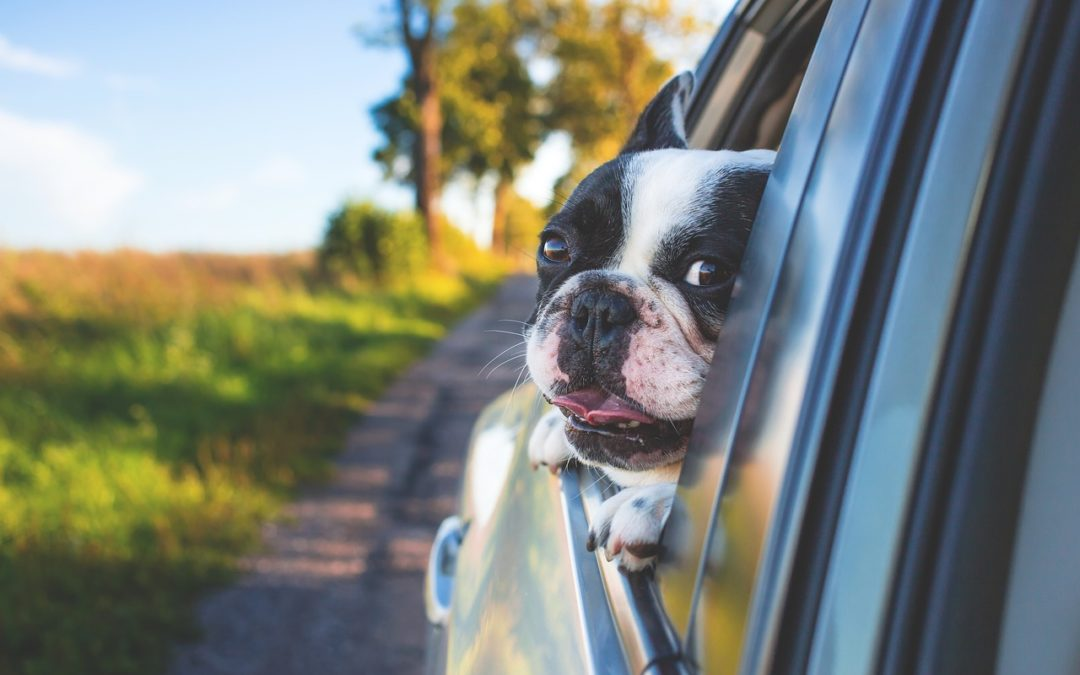 6 Tips For Road Trips With Your Dog